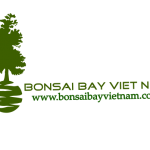 BONSAI BAY VIET NAM