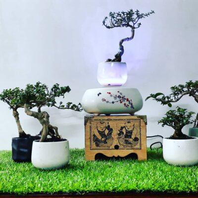 air-bonsai- hoa-dao