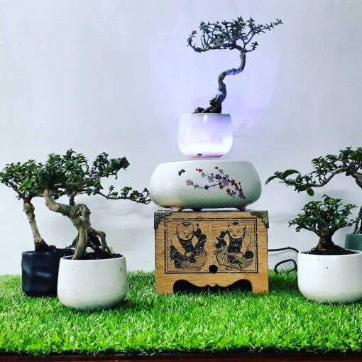 air-bonsai- hoa-dao