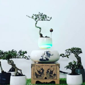 air-bonsai- hoa-lan.jpg