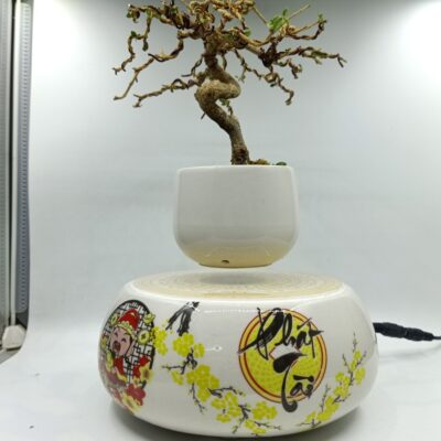 bonsaibayvietnamtet (110)