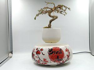 bonsaibayvietnamtet (182)