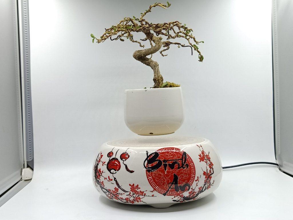 bonsaibayvietnamtet (187)