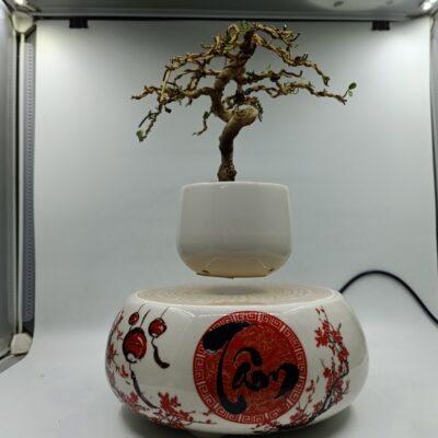 bonsaibayvietnamtet (188)