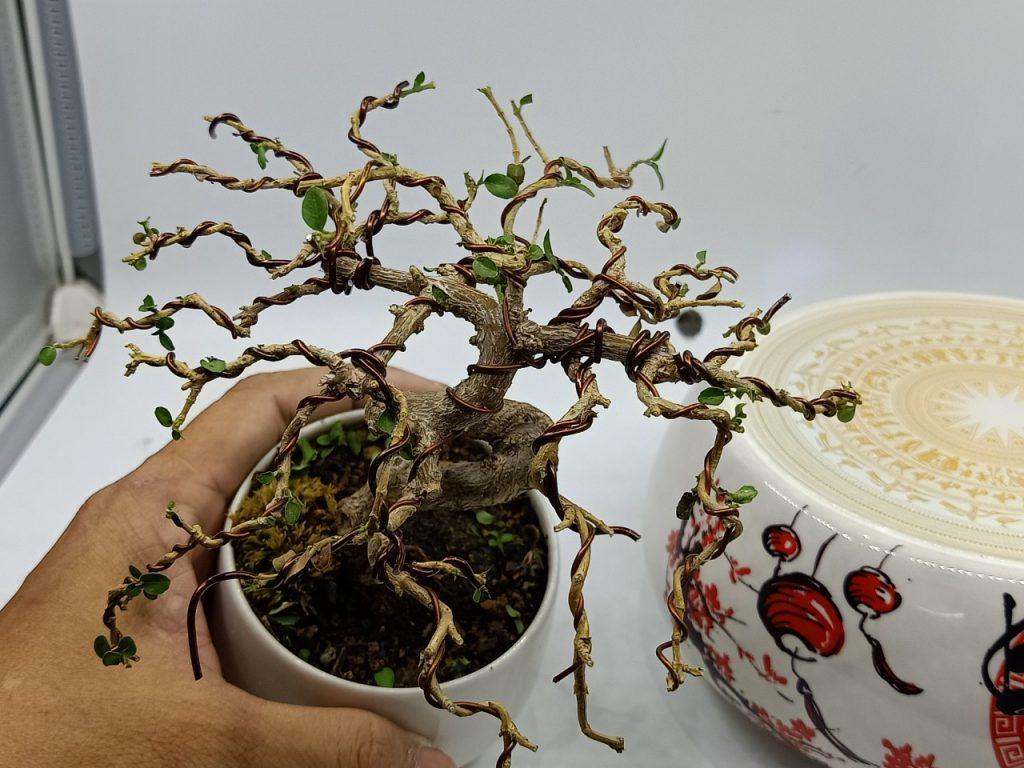 bonsaibayvietnamtet (189)