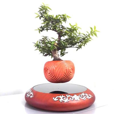 mua air bonsai ở đâu