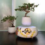 Bạn sẽ chọn loại bonsai bay giá rẻ nào?