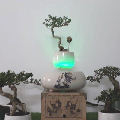 Bonsai bay Hoa xuan 2018 hoa lan (6)