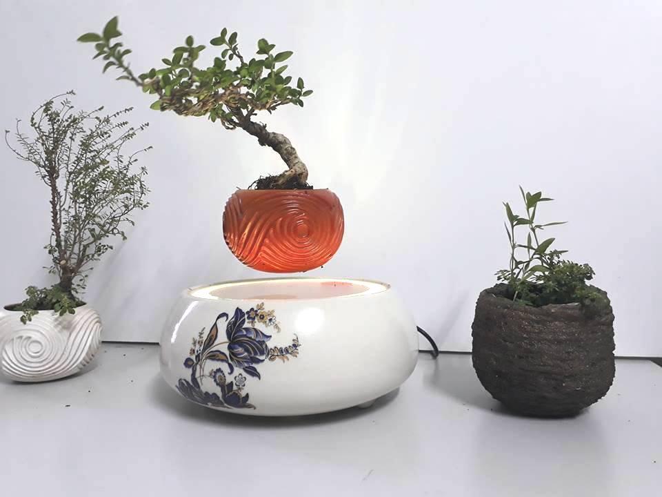 air bonsai viet nam 2018 (2)