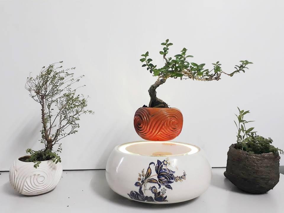 air bonsai viet nam 2018 (4)