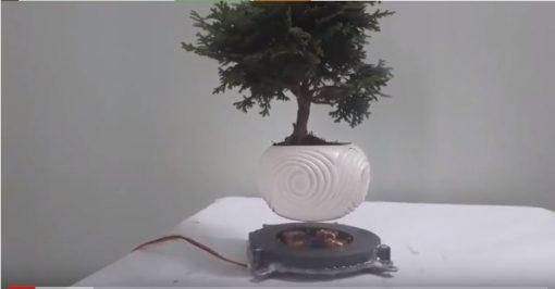 nam châm bonsai bay