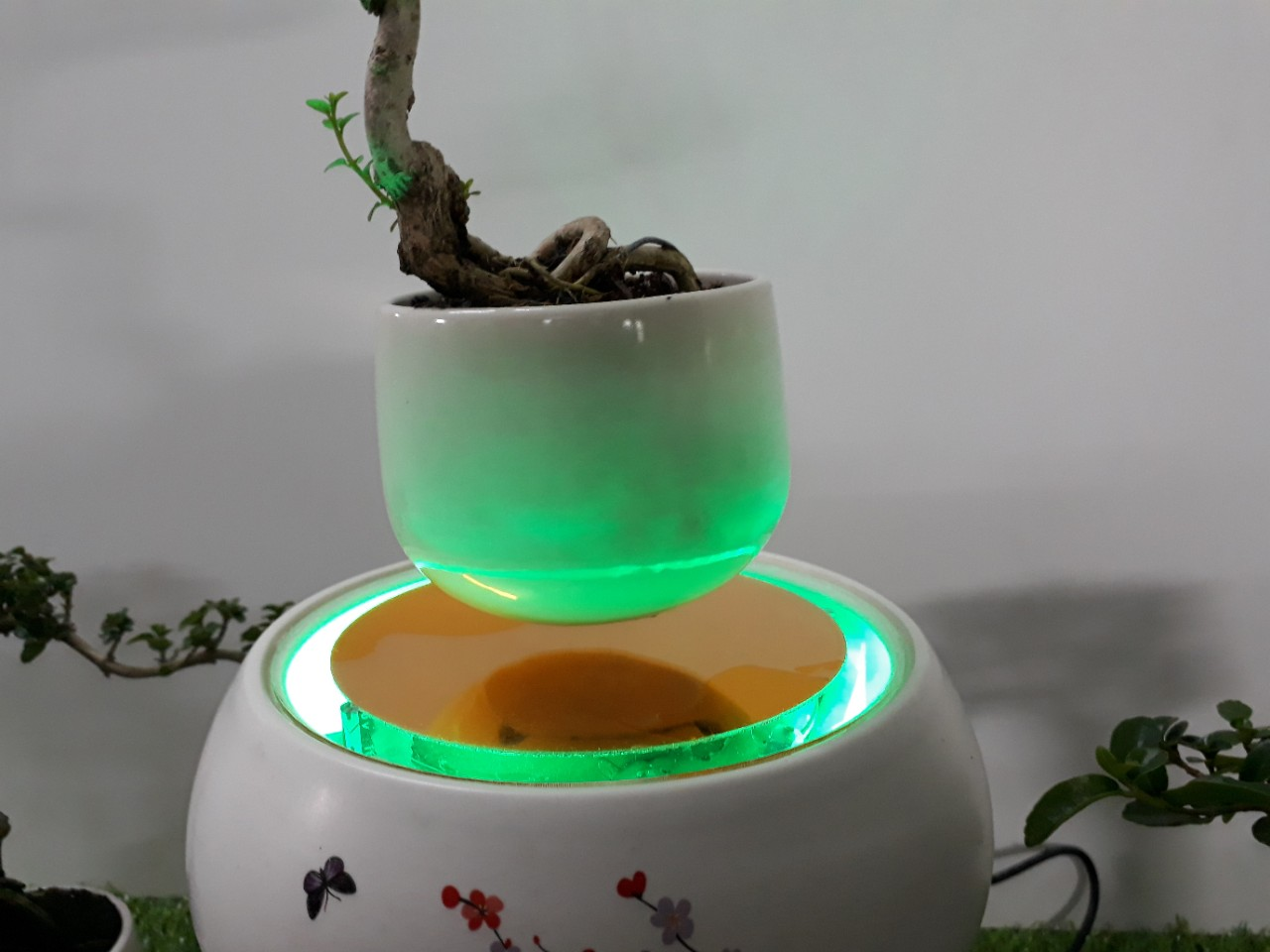 Bonsai bay hoa xuan 2018 Hoa Dao (14)