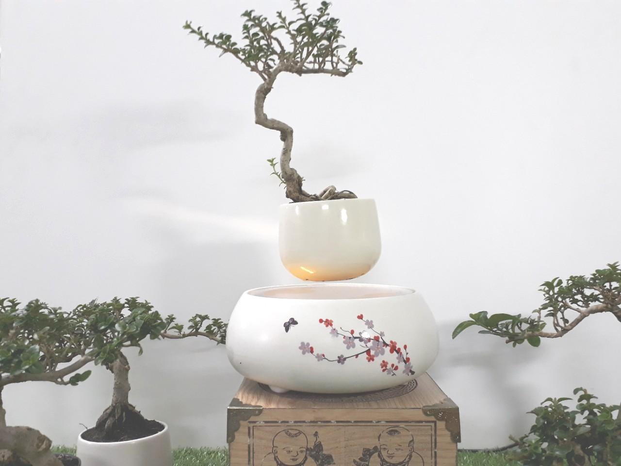 Bonsai bay hoa xuan 2018 Hoa Dao (6)