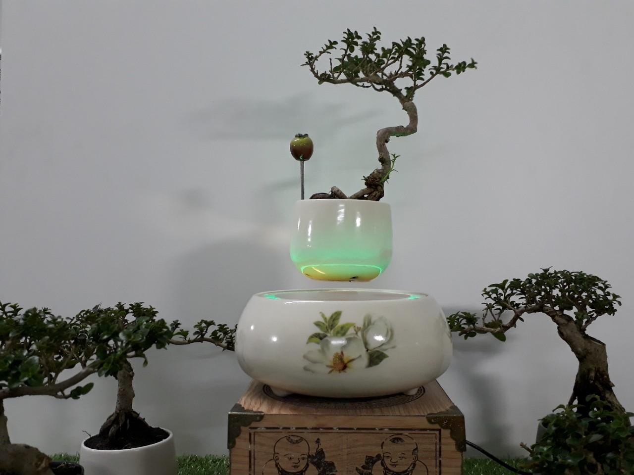 Bonsai bay hoa xuan 2018 - hoa tra (10)