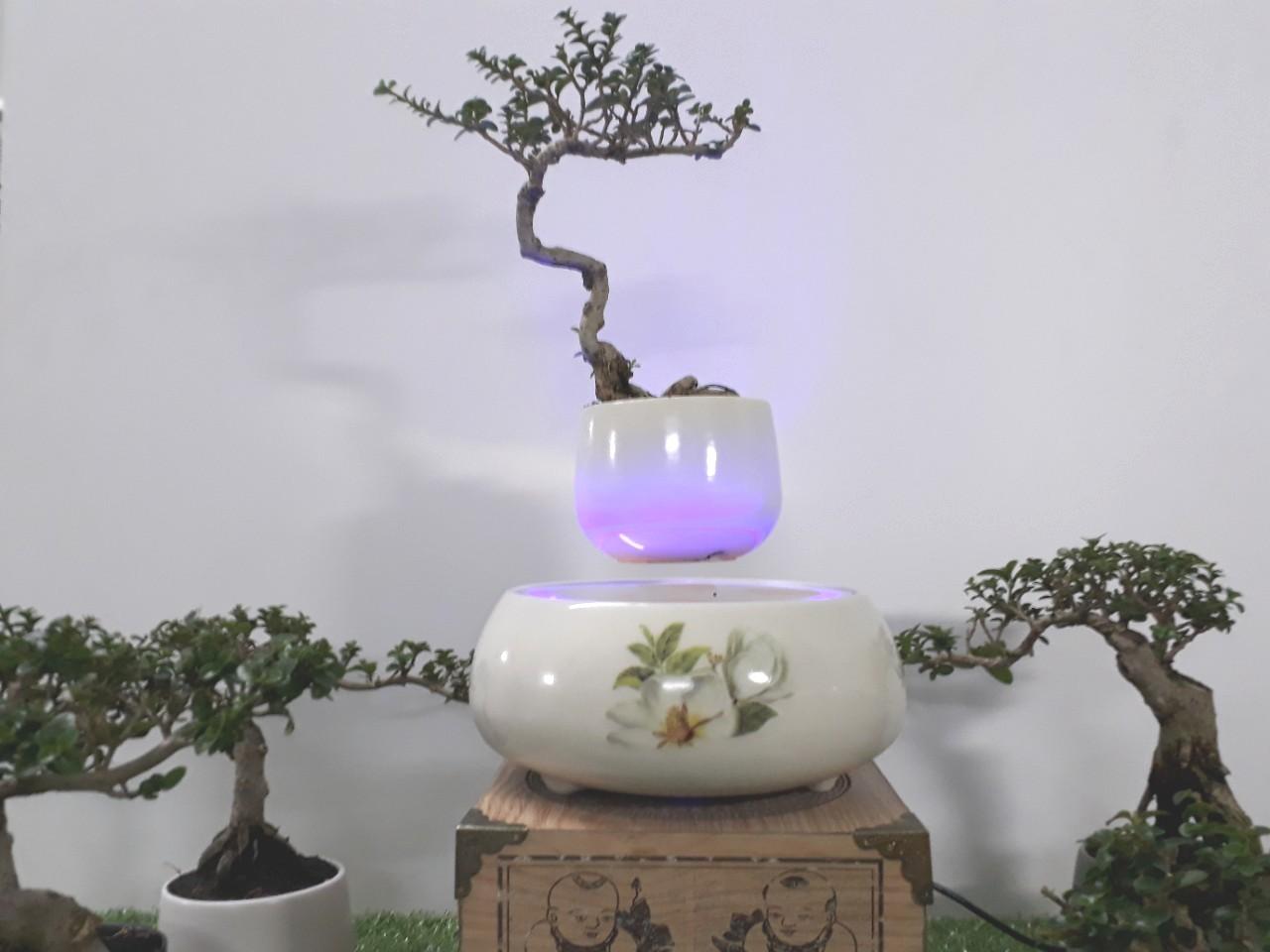 Bonsai bay hoa xuan 2018 - hoa tra (8)