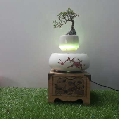 air bonsai bay Việt Nam