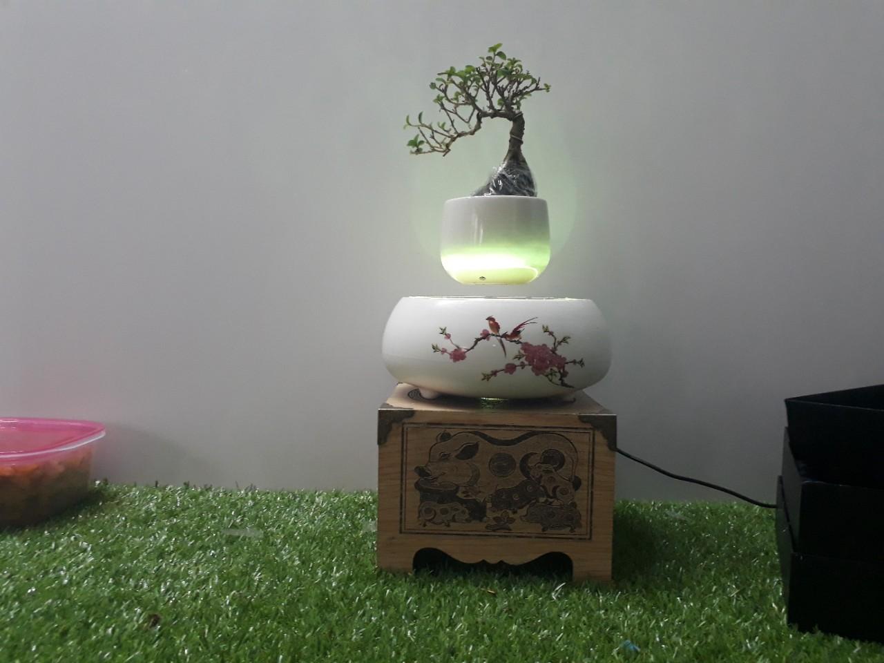 air bonsai bay Việt Nam