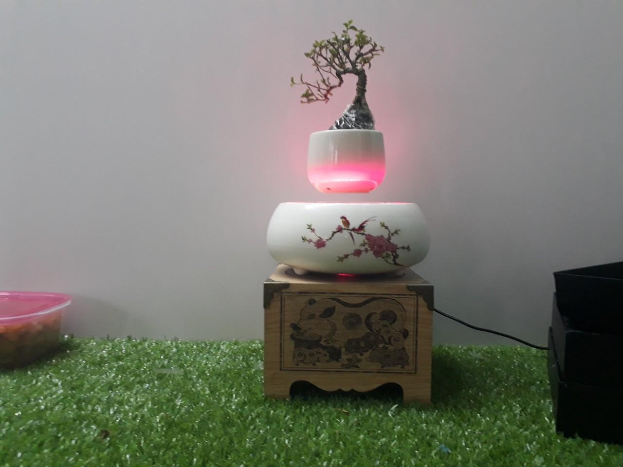 air-bonsai-bay (6)