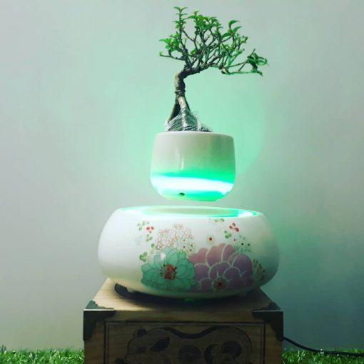 air-bonsai-bay dang