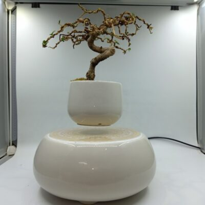 bonsaibayvietnamtet (164)