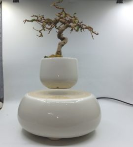 bonsaibayvietnamtet (167)