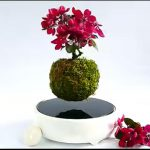Air Bonsai: Cây bonsai 'bay' của người Nhật