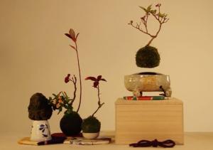 cach-lam-bonsai-bay
