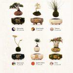 Cây bonsai bay lơ lững của Người Nhật
