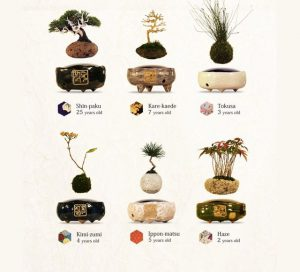 nhat-ban-ra-mat-cay-canh-bonsai-biet-bay-lo-lung (1)