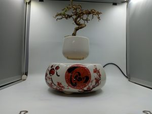 bonsaibayvietnamtet (175)