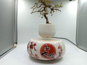 bonsaibayvietnamtet (176)