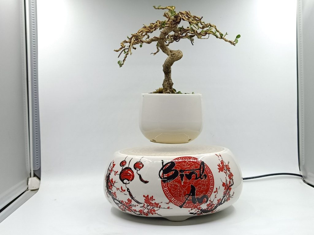 bonsaibayvietnamtet (184)