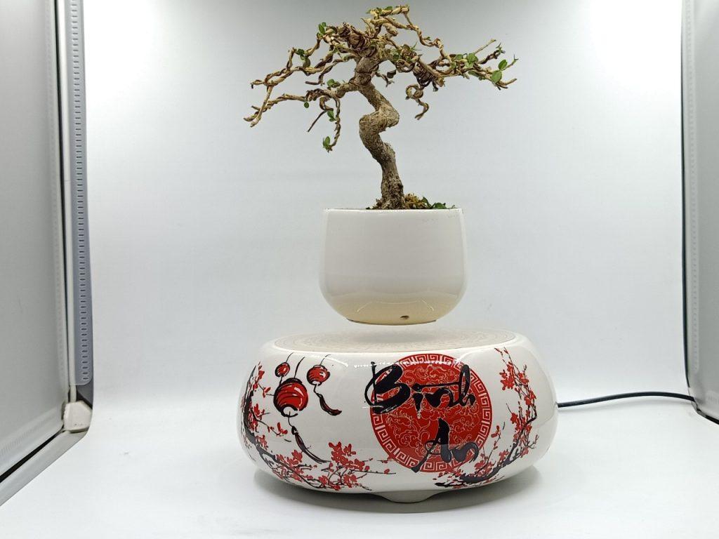 bonsaibayvietnamtet (186)