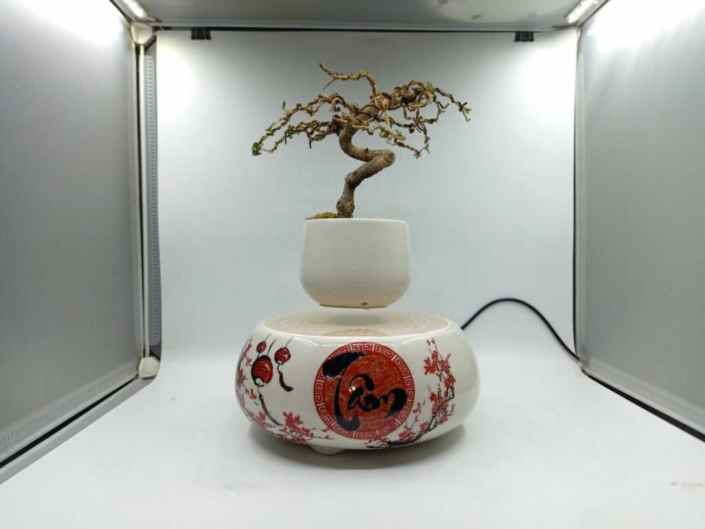 bonsaibayvietnamtet (199)