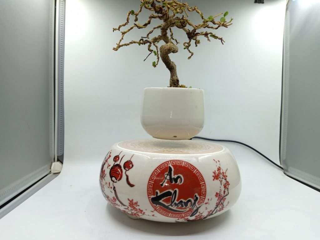 bonsaibayvietnamtet (200)