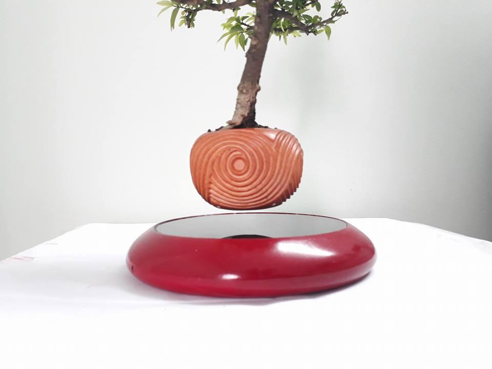 bonsai bay go mau son (1)