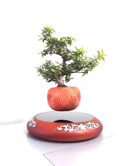 mua air bonsai ở đâu