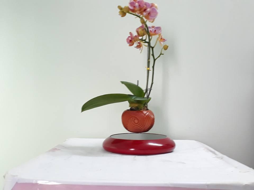 bonsaibayhoalan (3)