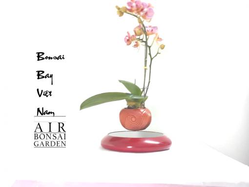 bonsai bay hoa lan