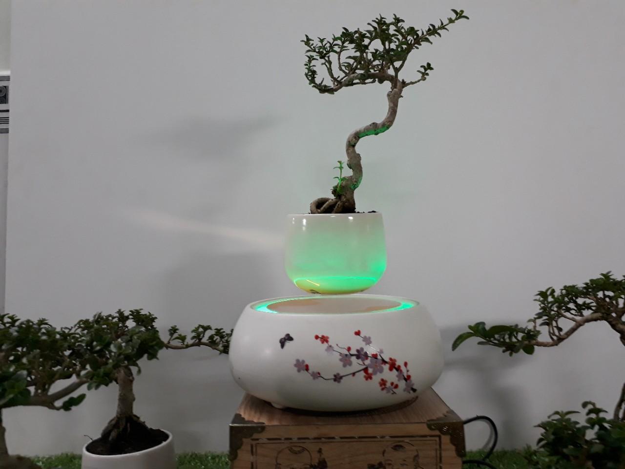 Bonsai bay hoa xuan 2018 Hoa Dao (12)
