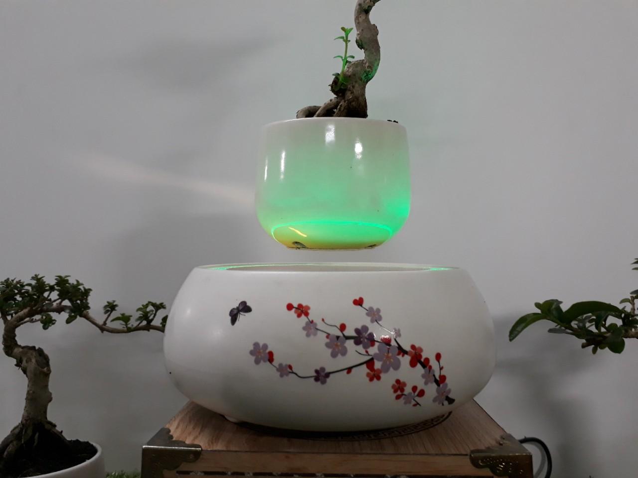 Bonsai bay hoa xuan 2018 Hoa Dao (13)
