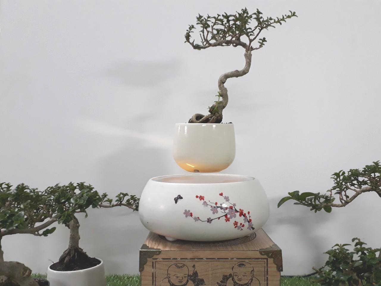 Bonsai bay hoa xuan 2018 Hoa Dao (7)