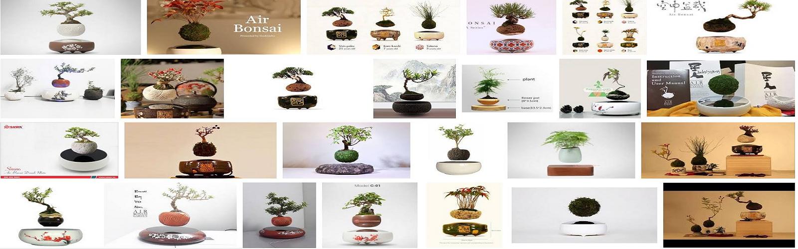 anh bonsai bay